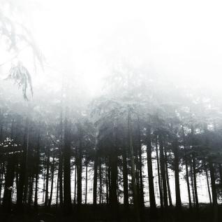 foggy woods, Germany
