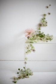 wild carrot installation