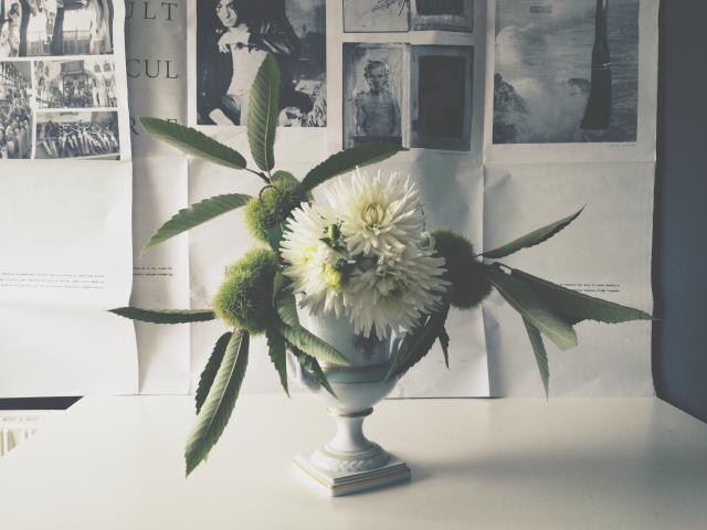 white dahlias
