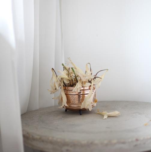 dried lilies