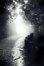 en route a foggy path, Italy