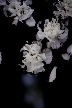 moody carnations