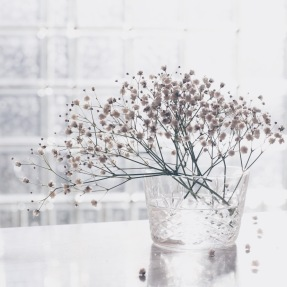 baby breath in winter light