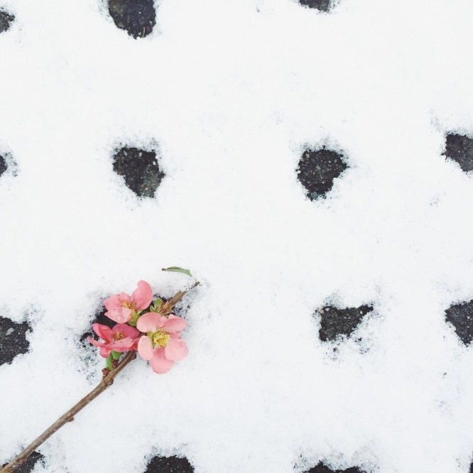 quince in the snow via anastasiabenko.com