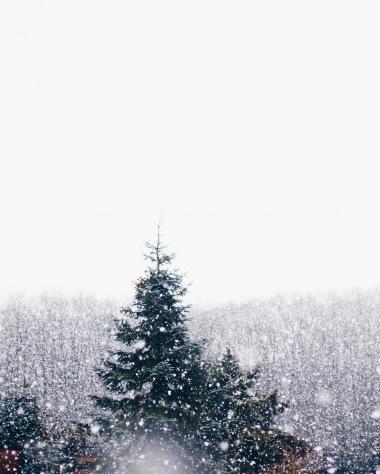 snowy woods, Germany via anastasiabenko.com