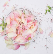 blush colored flowers via anastasiabenko.com