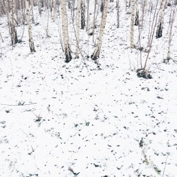 snow + birches, Germany via anastasiabenko.com