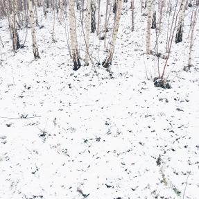 snow + birches, Germany via anastasiabenko.com