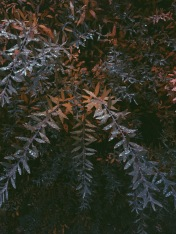 leaves with drops - autumnal colors