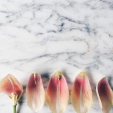 blush colored flowers via anastasiabenko.com