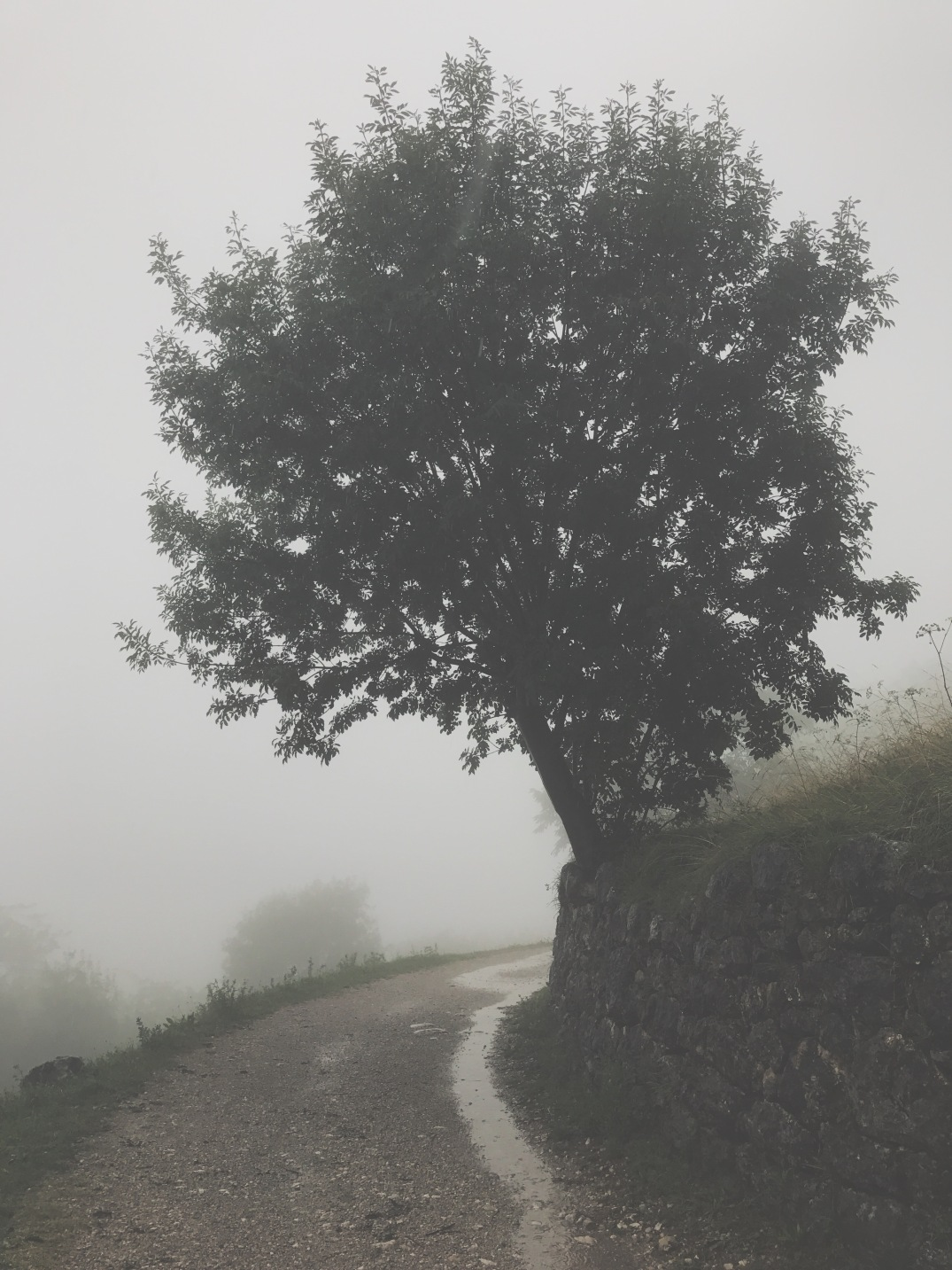 foggy mountain road, Italy