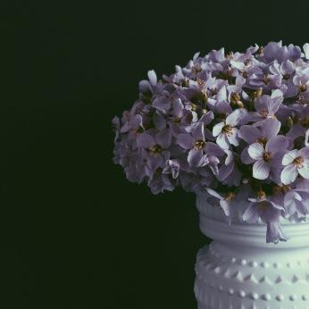 moody cuckoo flower via anastasiabenko.com