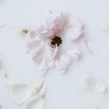 fading flowers installation with milk