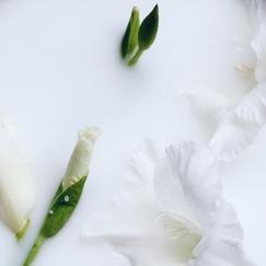 fading flowers by Anastasia Benko