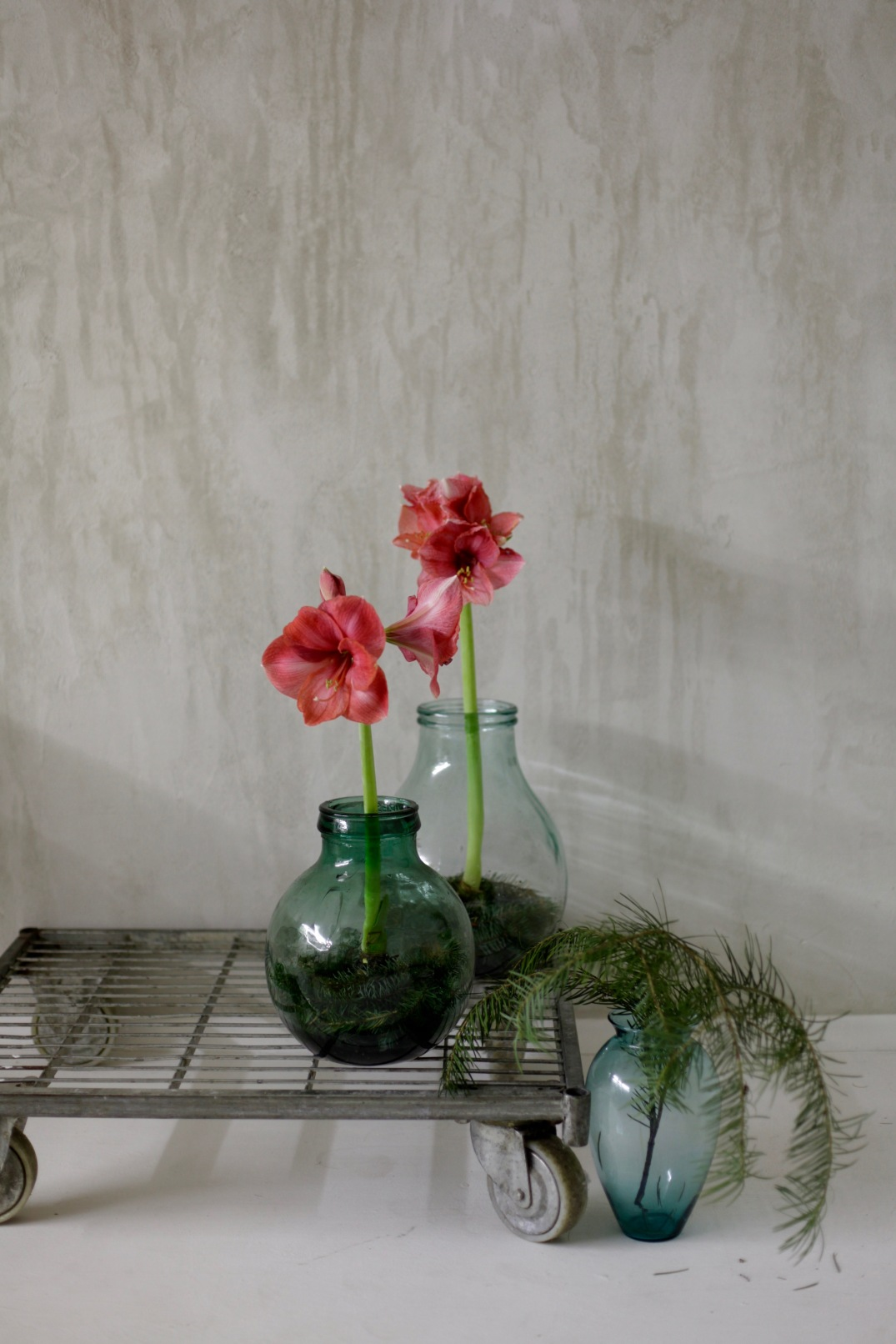 amaryllis in vintage vases - easy christmas decoration via Anastasia Benko