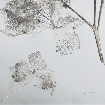 dried hydrangeas via anastasiabenko.com