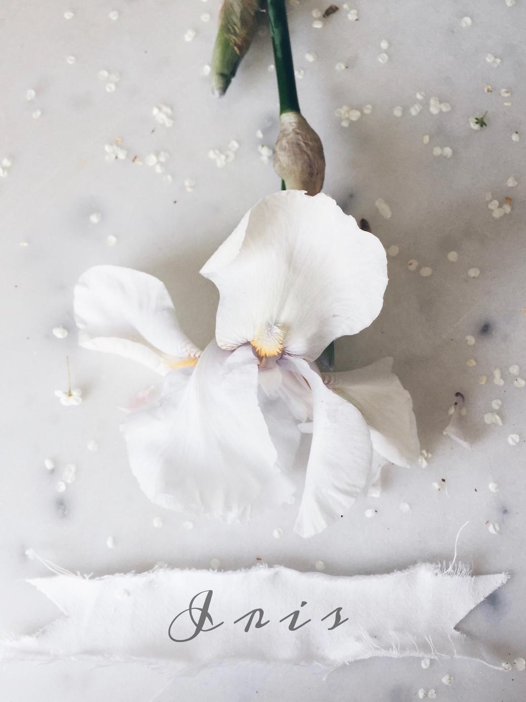 iris floral photography / stylist Anastasia Benko
