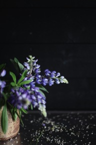 wild lupine, moody floral photography, foraged in Denmark