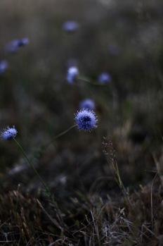 wild meadow, Denmark
