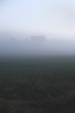 fog over meadow, Denmark