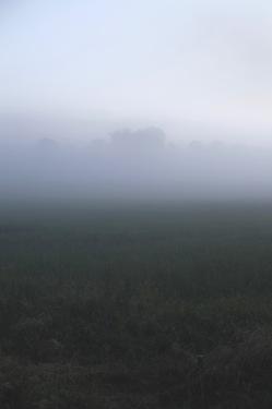 fog over meadow, Denmark
