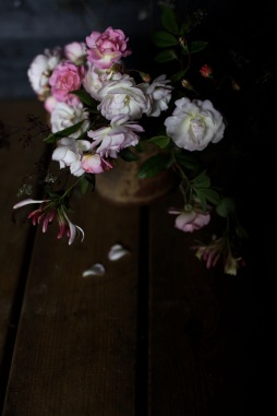 wild roses foraged in Denmark, moody flower photography
