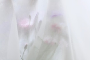 soft airy floral photography