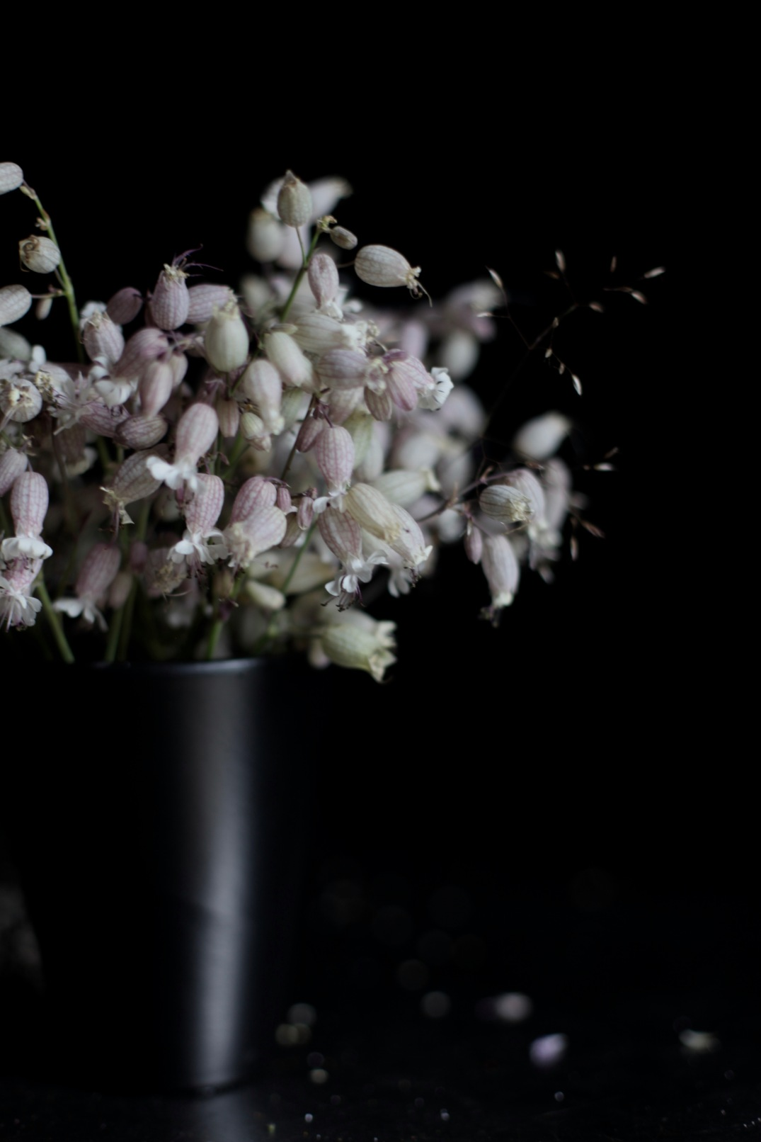 moody floral photography, back vase with Silene, foraged in Denmark