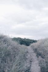 Danish landscapes, dunes in Rømø, Denmark