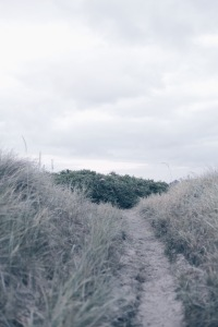 Danish landscapes, dunes in Rømø, Denmark