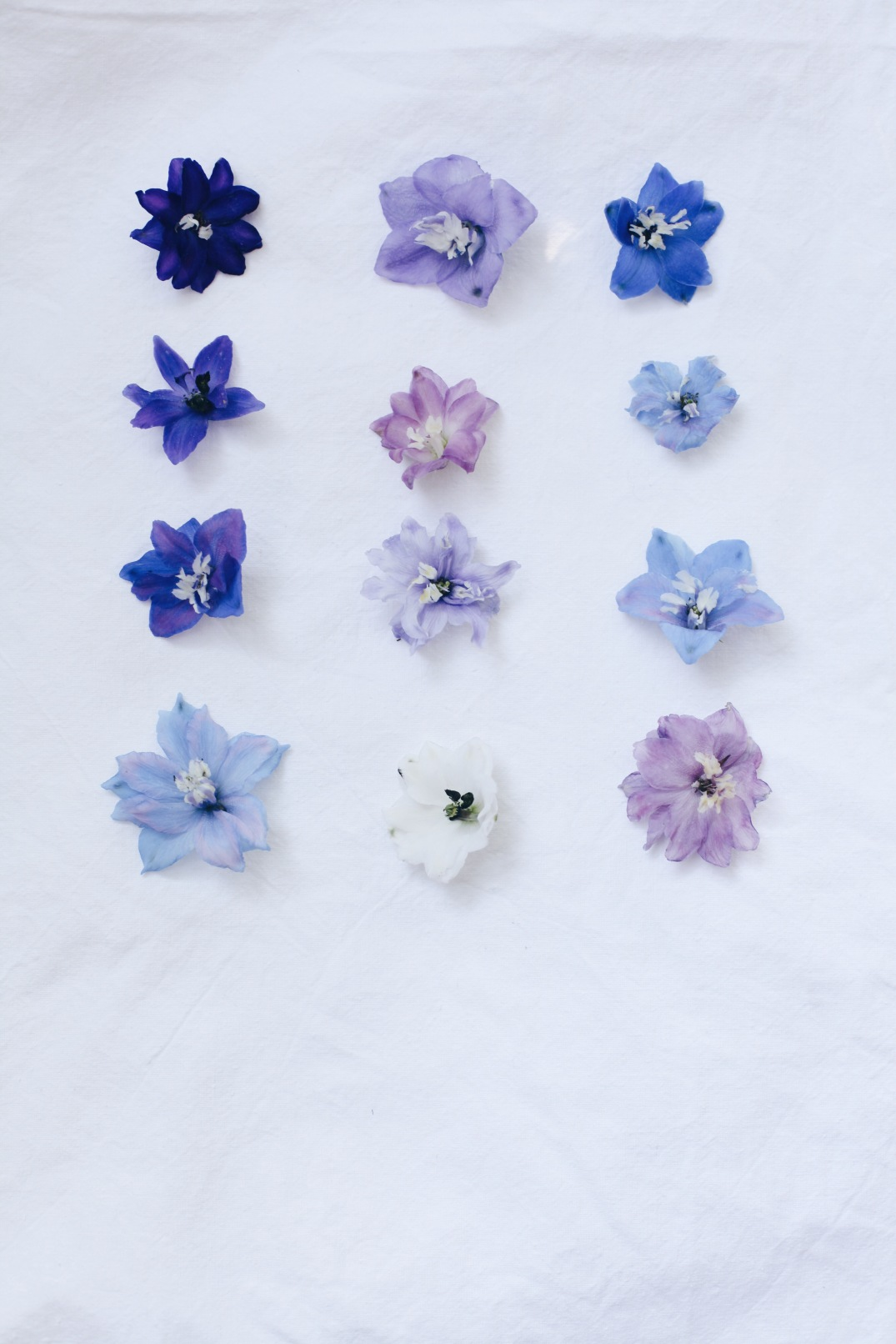 varieties of delphinium