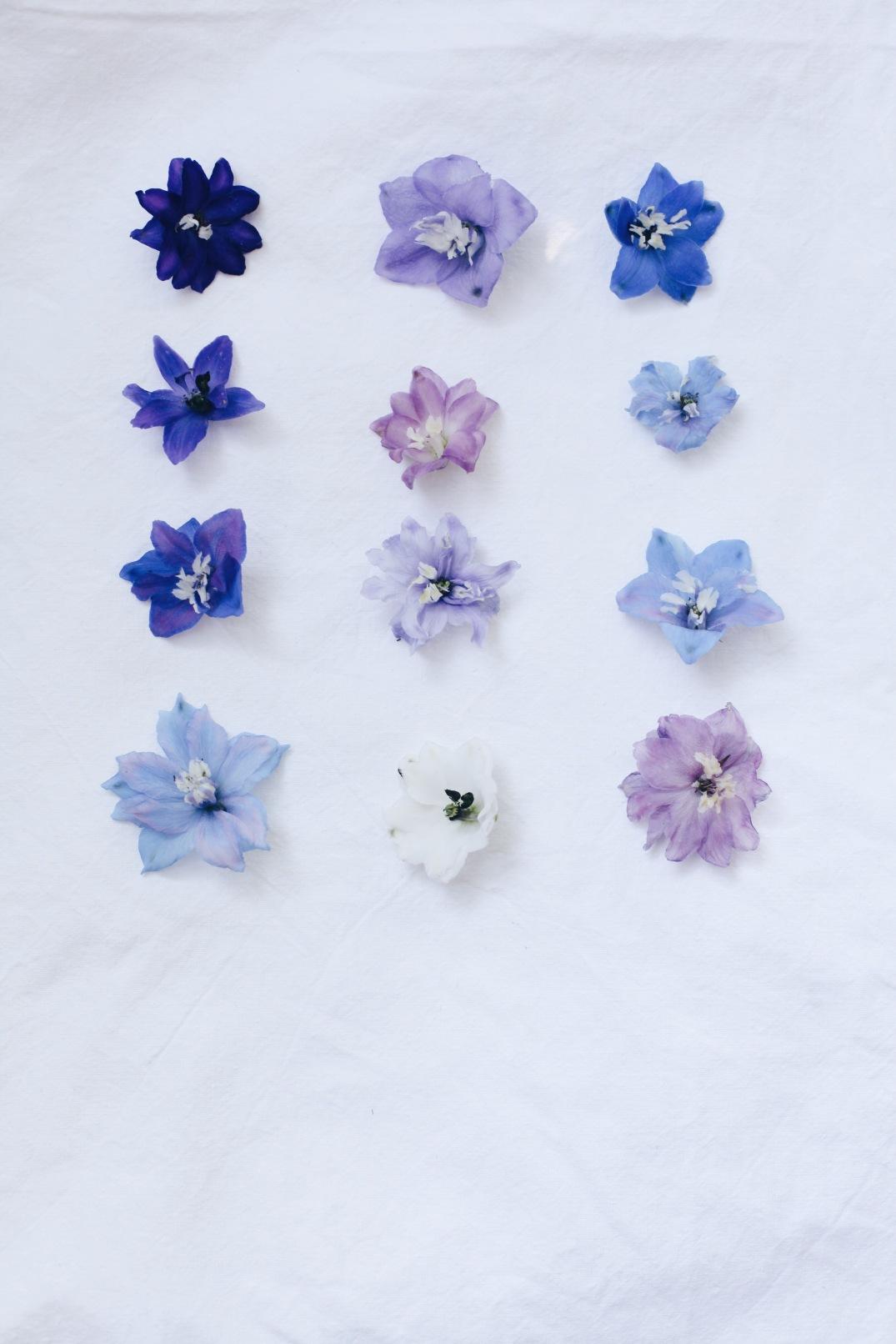 varieties of delphinium