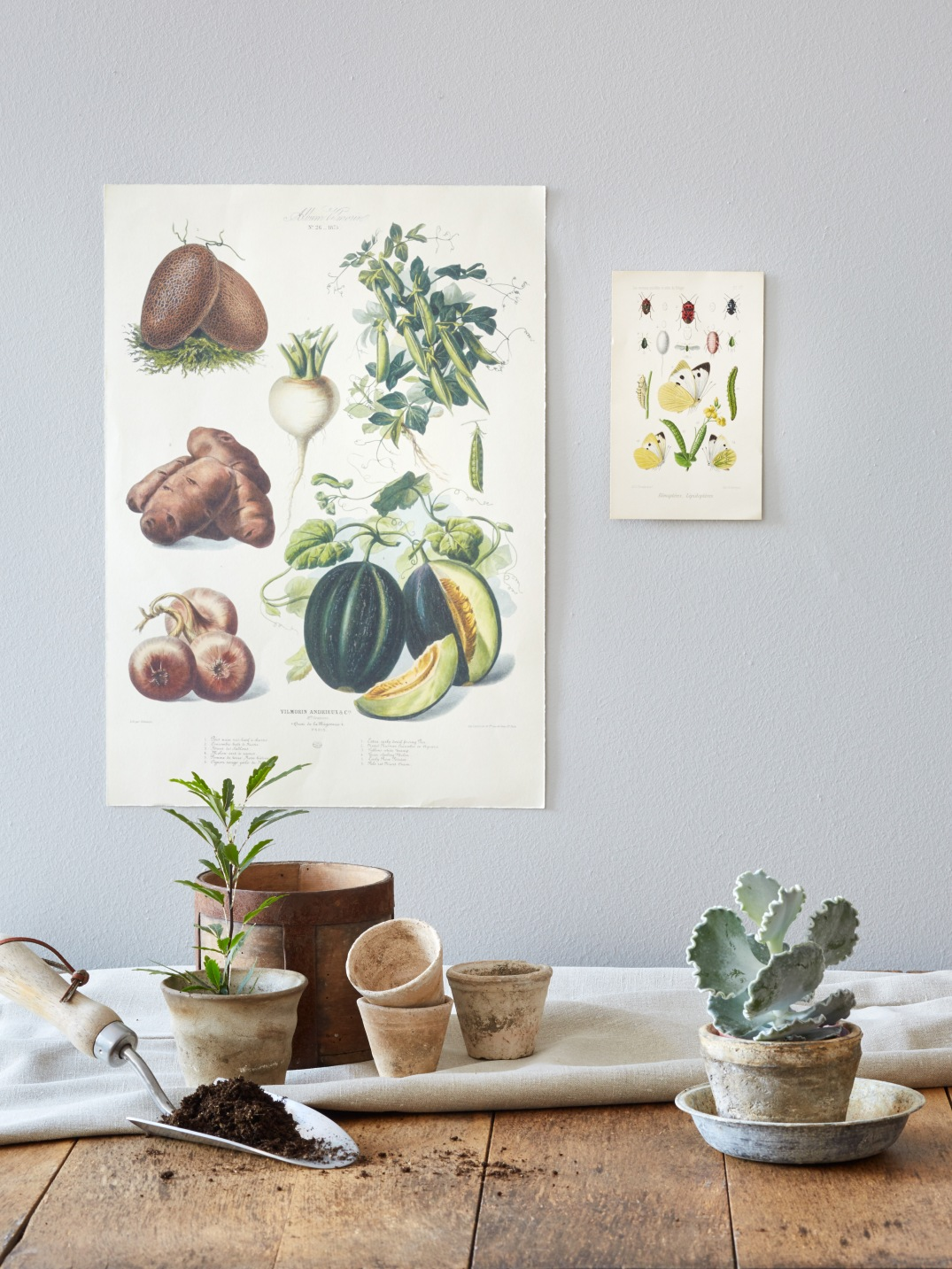 rustic table with antique prints and plants