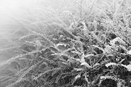 Winter Whiteout - foggy winter morning