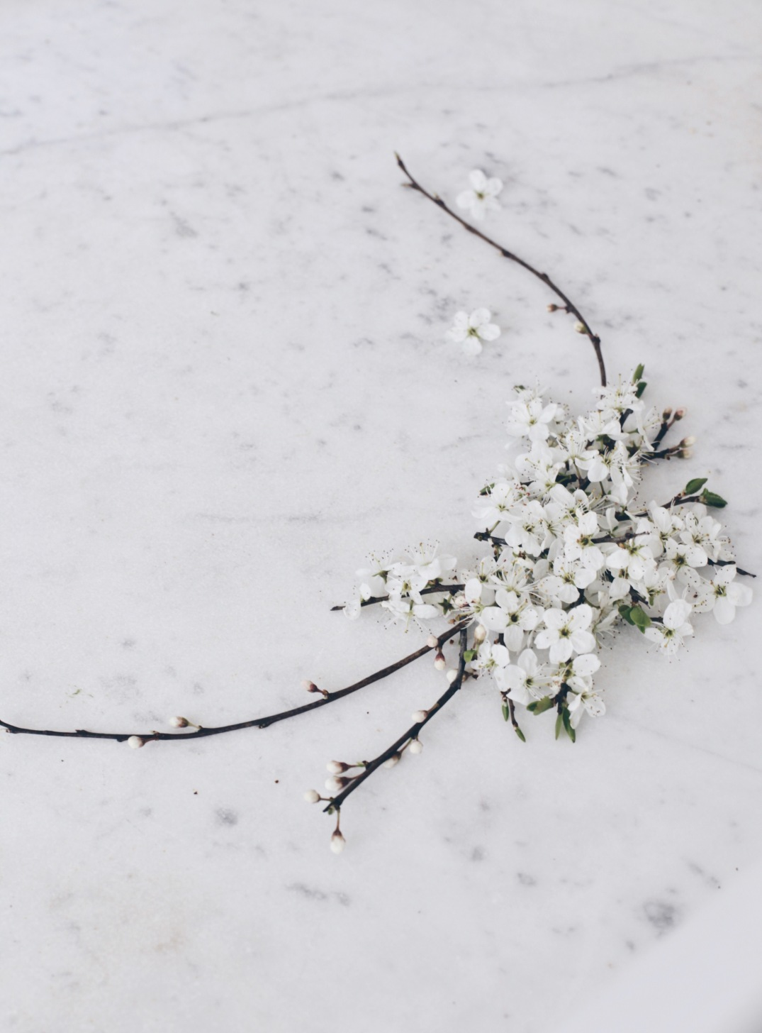 White blossom spring arrangement