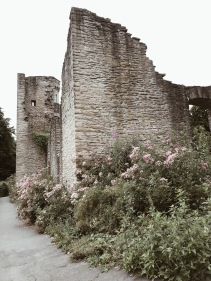 Visit Hohensyburg, Germany, castle from the Middle Ages with pink wild roses