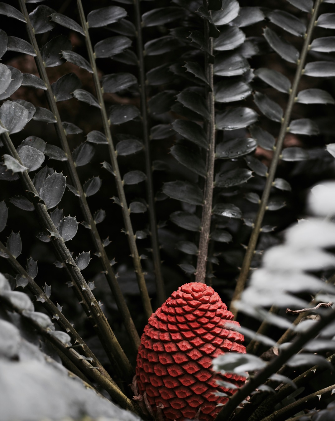 details at botanical garden in Munich, Germany