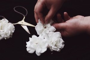 arranging white roses on a dark background