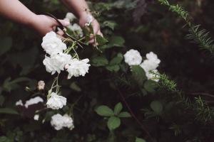 white roses from the garden