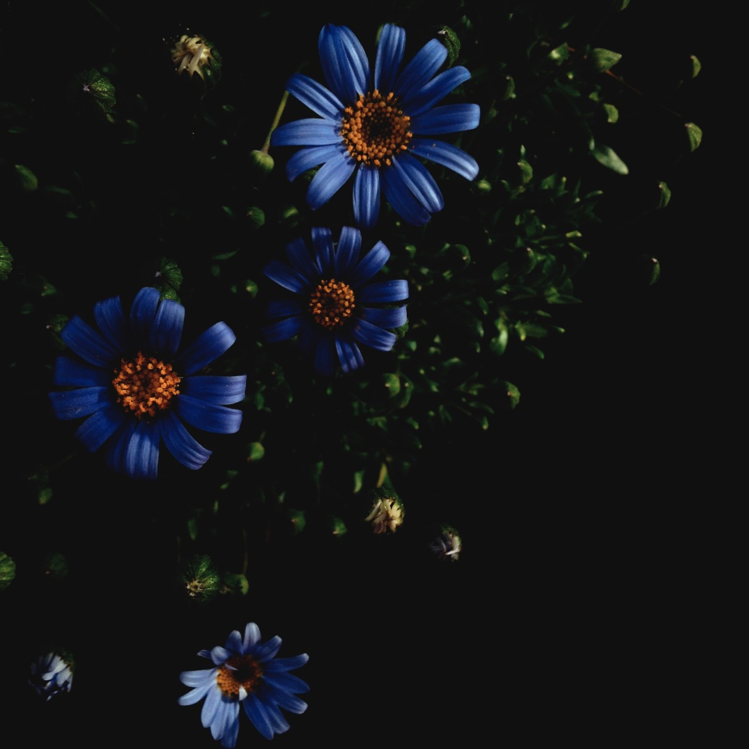 moody flower photography