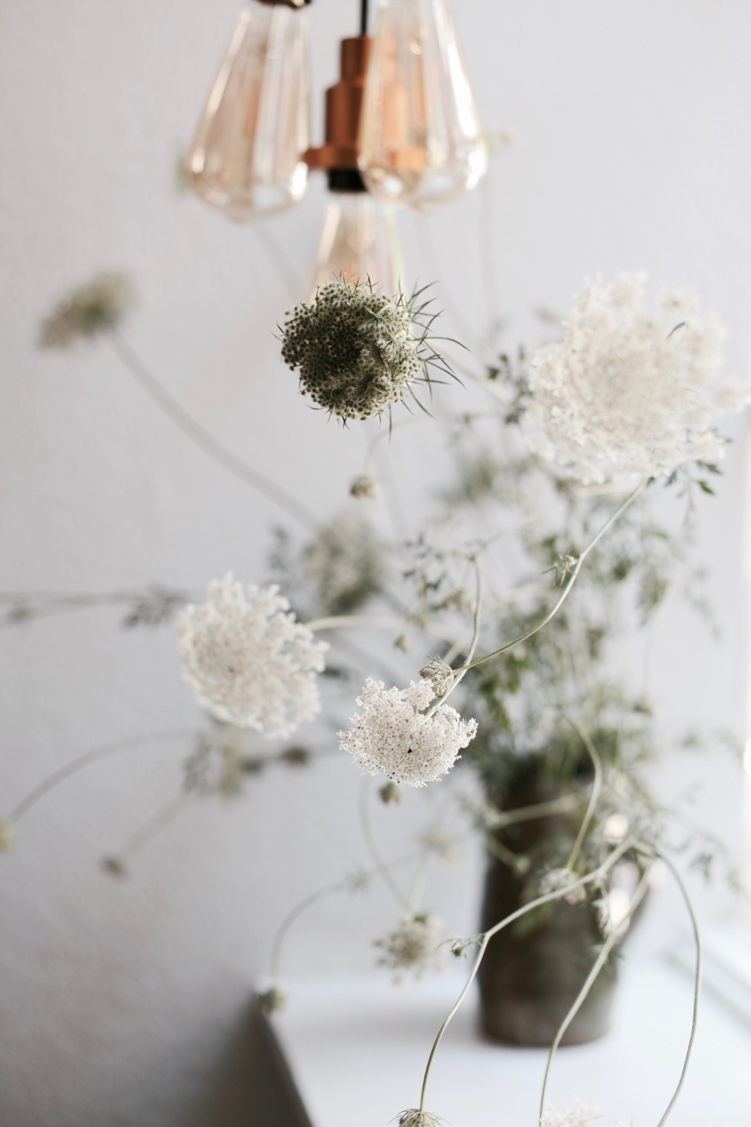 Queen Anne's Lace and Osram bulbs in front of window