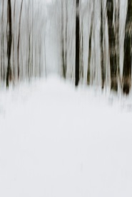 snowy woods - blurry on purpose